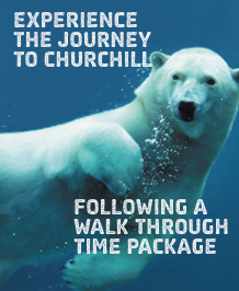 Journey to Churchill Following a Walk Through Time